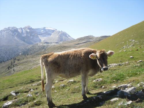[2012-09-16] Dolomiten-überschreitung vom Fanestal über das Antoniusjöchl ins Rautal (Bus)